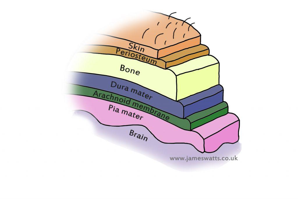 brain tissue diagram meninges, csf & venous drainage - vetsci head tissue diagram #10