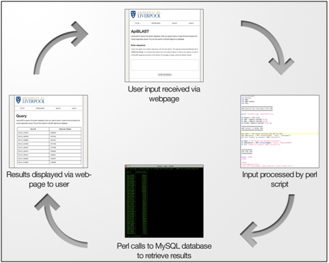figure 2 [Special]: Development of a Web Based Database for Orphan Genes of the Apicomplexa special bioinformatics