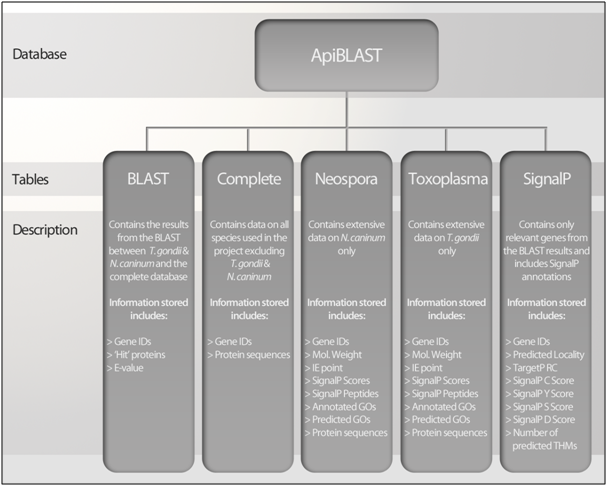 Figure 5 - Overview of the information stored in each MySQL table of the MySQL database 'ApiBLAST'