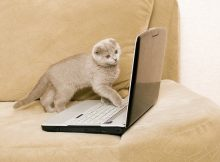 cat and laptop on a sofa
